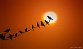 sunrise_birds_by_regayip-d5ubgut - 268 x 160 pixels