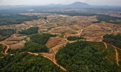 Palm Oil Plantation in Central Kalimantan