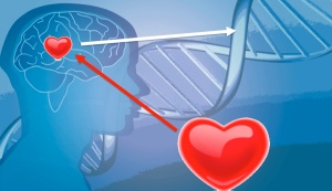 brain-heart-and-DNA