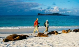galapagos-islands-photos-sea-lions-with-guests